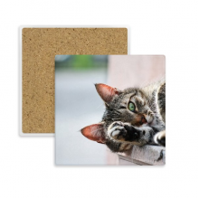 Animal Activity Cat Photograph Picture Square Coaster Cup Mug Holder Absorbent Stone for Drinks 2pcs Gift
