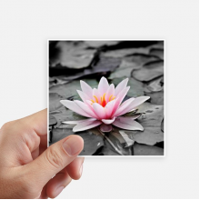 Pink Flowers Red Lotus Square Stickers 10cm Wall Suitcase Laptop Motobike Decal 8pcs