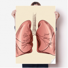 Organ Lung Human Illustration Sticker Poster Decal 31x22