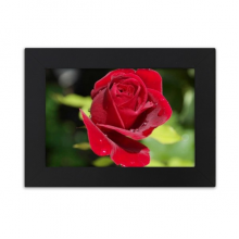 Dark Red Roses Flowers Desktop Photo Frame Black Picture Art Painting 5x7 inch