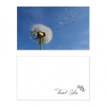 Blue Sky Beautiful White Dandelion Thank You Card Birthday Wedding Business Message Set