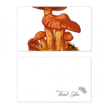 Cute Orange Mushroom Creature Illustration Thank You Card Birthday Wedding Business Message Set