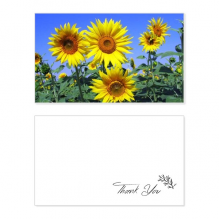 Sunshine Flowers Sunflowers Blue Sky Thank You Card Birthday Wedding Business Message Set